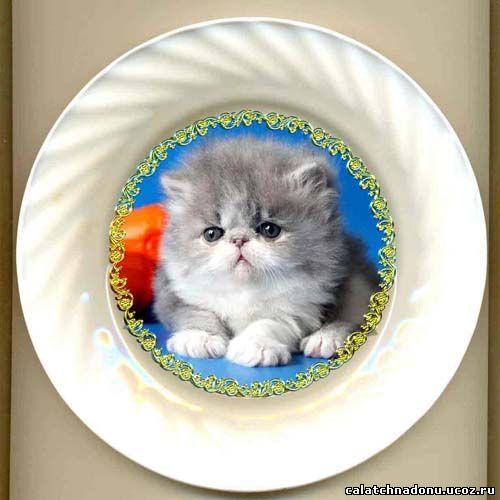 Декоративная тарелка с фотографией домашнего питомца